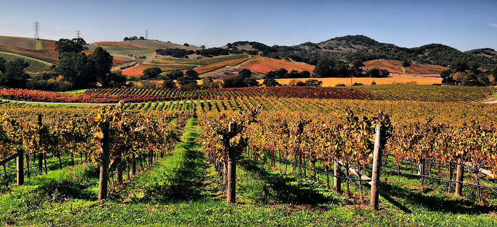 vineyards_in_napa_valley