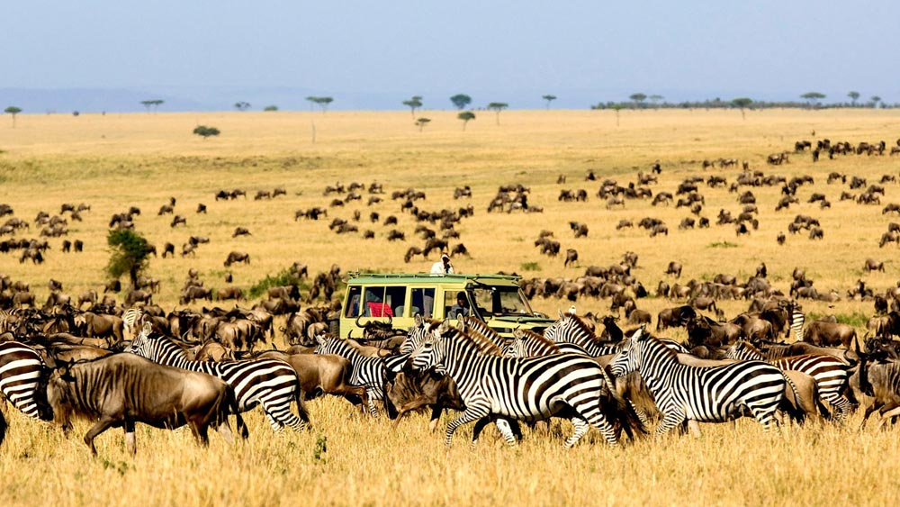 Great Migration Safari in Tanzania - Tanzania, Safari