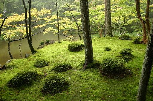 kyoto-kokedera